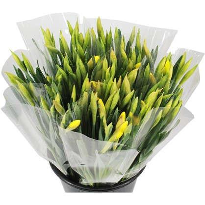 Купить Букет Нарциссы высота 30 см 10 шт. дешевле