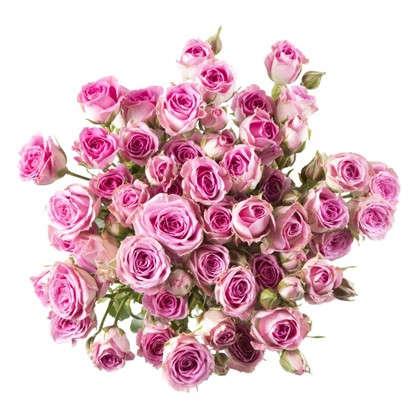 Купить Букет Роза кустовая высота 40 см 9 шт. дешевле