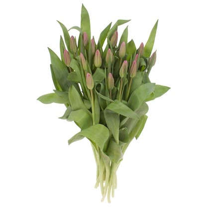 Купить Букет Тюльпаны 15 шт. дешевле