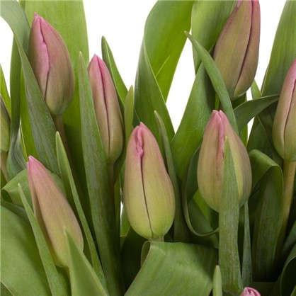 Купить Букет Тюльпаны 7 шт. дешевле
