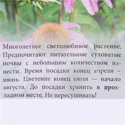 Эхинацея Магнус 2/16 (MAGNUS)