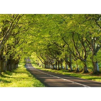 Фотообои бумажные Чувство весны 254х184 см