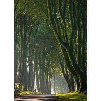 Фотообои бумажные Королевская дорога 184х254 см