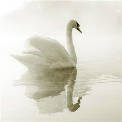 Фотообои флизелиновые Лебедь 200х200 cм