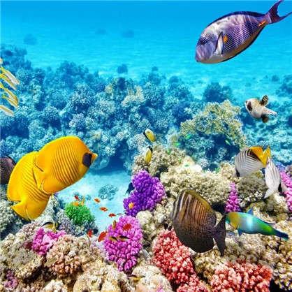 Фотообои флизелиновые Подводный мир 200х200 см