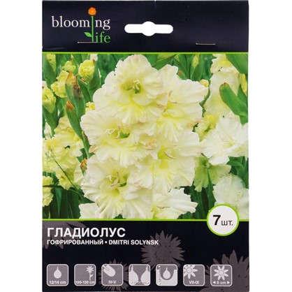 Купить Гладиолус гофрированный Дмитрий Солунский дешевле