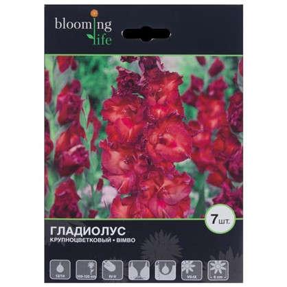 Купить Гладиолус крупноцветковый Бимбо дешевле