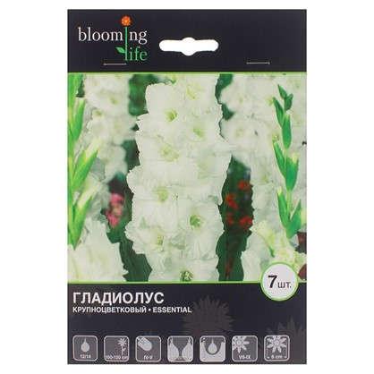 Гладиолус крупноцветковый Эссеншл