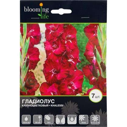 Купить Гладиолус крупноцветковый Кхалиси дешевле