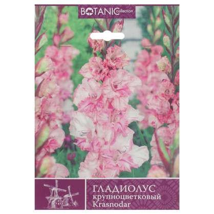 Гладиолус крупноцветковый Краснодар