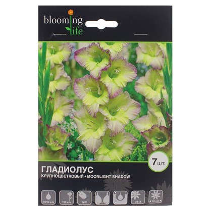 Гладиолус крупноцветковый Мунлайт Шейдоу