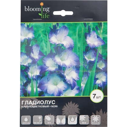 Гладиолус крупноцветковый Нори