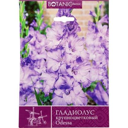 Гладиолус крупноцветковый Одесса