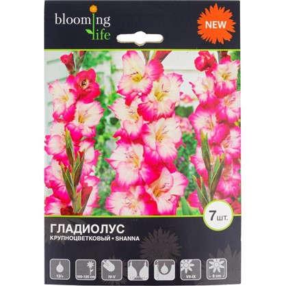 Купить Гладиолус крупноцветковый Шанна дешевле