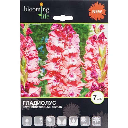 Гладиолус крупноцветковый Сызрань