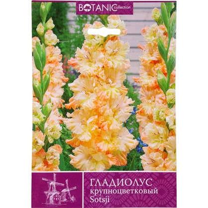 Купить Гладиолус крупноцветковый Сочи дешевле