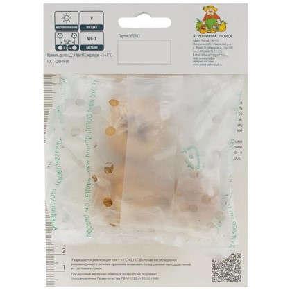 Гладиолус крупноцветковой Вайн анд Роузес