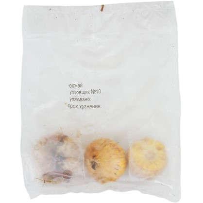 Гладиолусы бамбино Васто размер луковицы 10/12 1 шт.