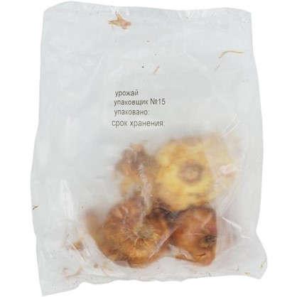 Гладиолусы крупноцветковые Роксанна размер луковицы 10/12 1 шт.