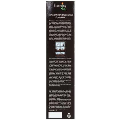 Купить Гортензия мелкопильчатая Прециоза (в тубе) дешевле
