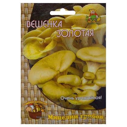 Гриб вёшенка золотая или лимонная Мицелий на древесном носителе