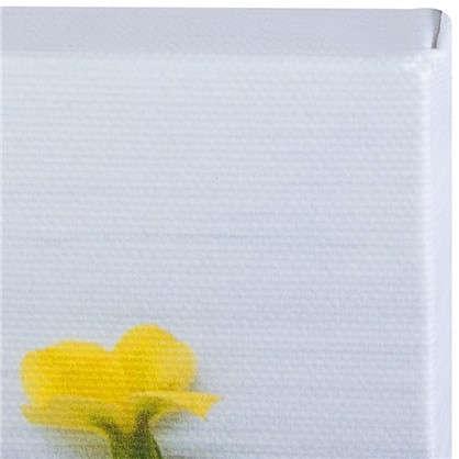 Картина на холсте 40х50 см Цветы