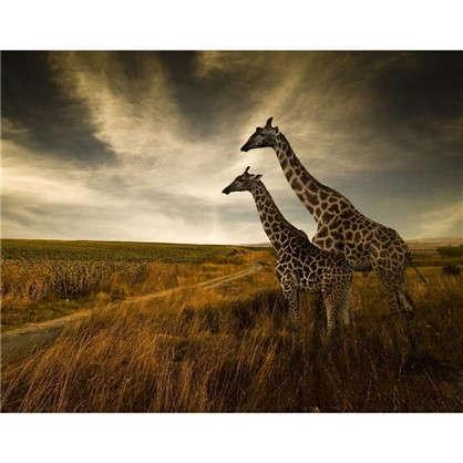 Купить Картина на холсте 40х50 см Жирафы дешевле