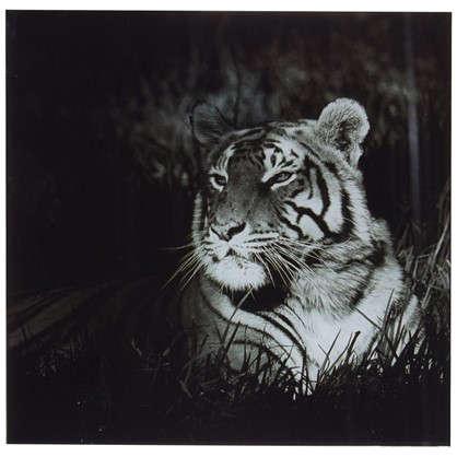 Купить Картина на стекле 30х30 см Бенгальский тигр дешевле
