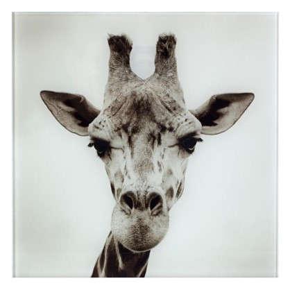 Картина на стекле 30х30 см Жираф