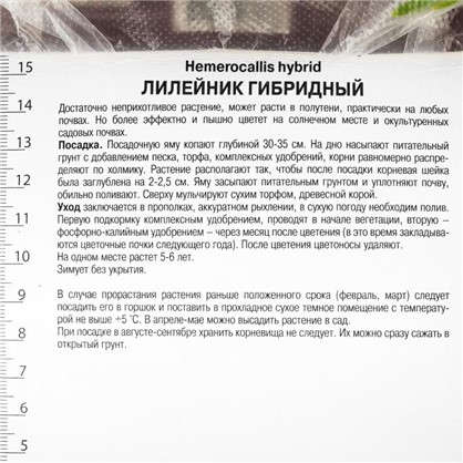 Лилейник гибридный Литтл Анна Роза 1 шт.