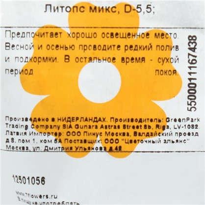 Литопс микс 5х10 см