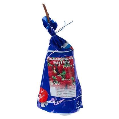 Малина красная Бабье Лето (пакет)
