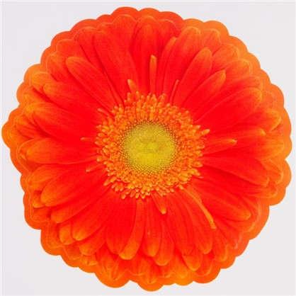 Наклейка Герберы желто-оранжевые Декоретто S