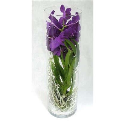 Орхидея Ванда в стекле 15х50 см