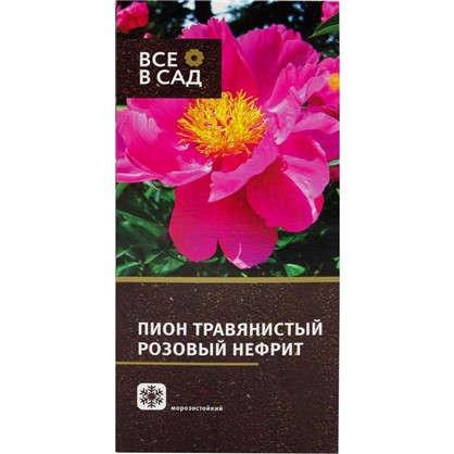 Пион травянистый Розовый нефрит Красный