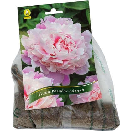 Пион травянистый Розовое облако