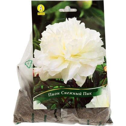 Купить Пион травянистый Снежный пик дешевле