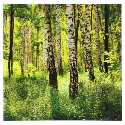 Постер на стекле 40х40 см Солнечный лес