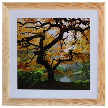 Купить Постер в раме 40х40 см Осенний Клен дешевле