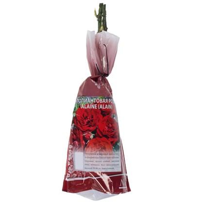 Купить Роза Alaine полиантовая  (тб 9*9) дешевле