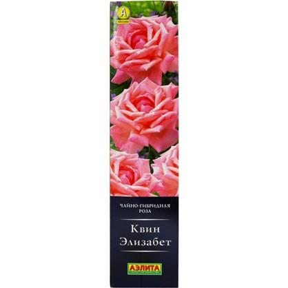 Купить Роза чайно-гибридная Квин Элизабет дешевле