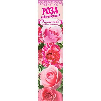 Роза чайно-гибридная Русская Красавица в коробке