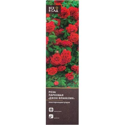 Купить Роза парковая Джон Франклин в тубе дешевле