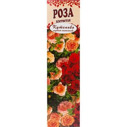 Роза плетистая Полка в коробке