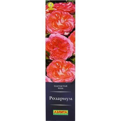 Роза плетистая Розариум