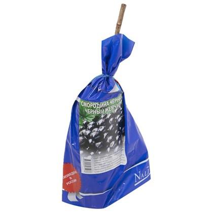 Смородина черная Черный Жемчуг (пакет)