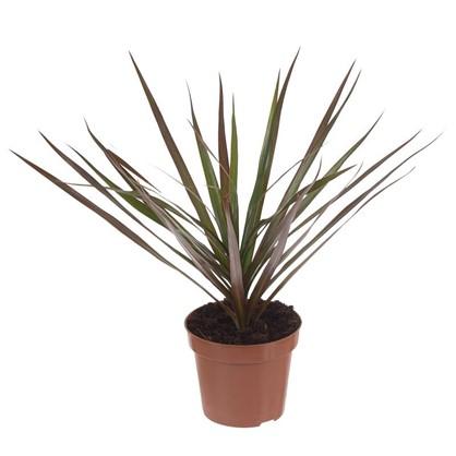 Удобрение Plants Mix
